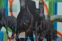 Het Friese paard in beeld (4)